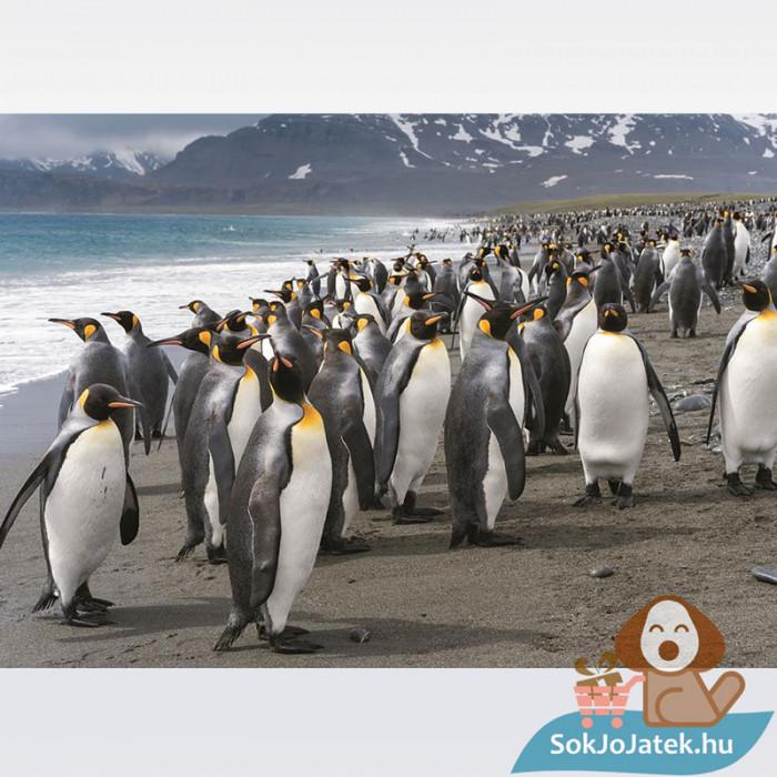 Dino Puzzle: Pingvinek - 1000 db, a kép